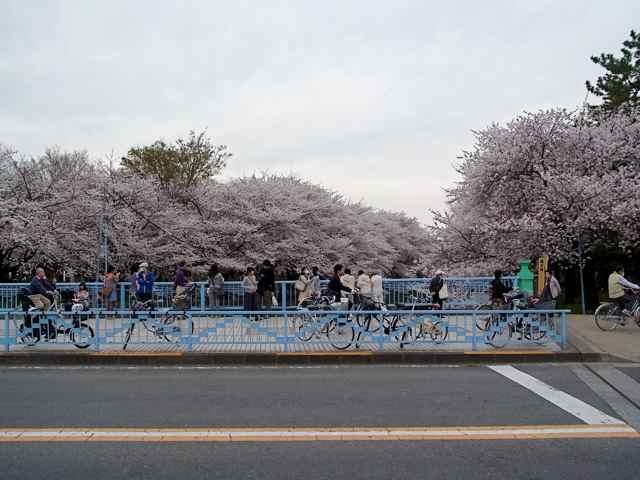 @善福寺川五日市街道交差点.jpg