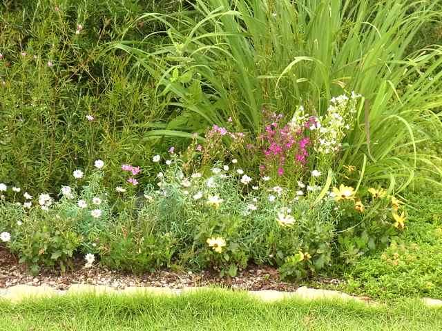 いろいろな花が咲いている.jpg