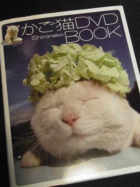 かご猫.jpg