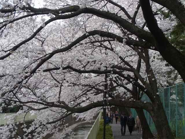 ここもトンネルだ@神田川沿い高井戸〜浜田山.jpg