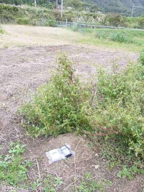 ミニ菜園の土壌.jpg