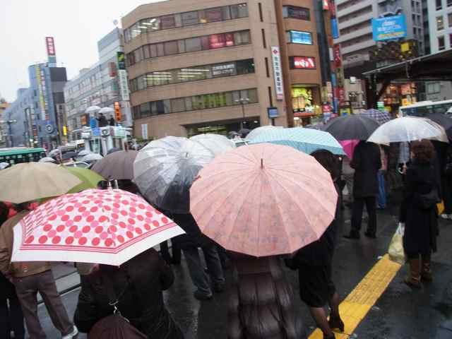 傘の花.jpg