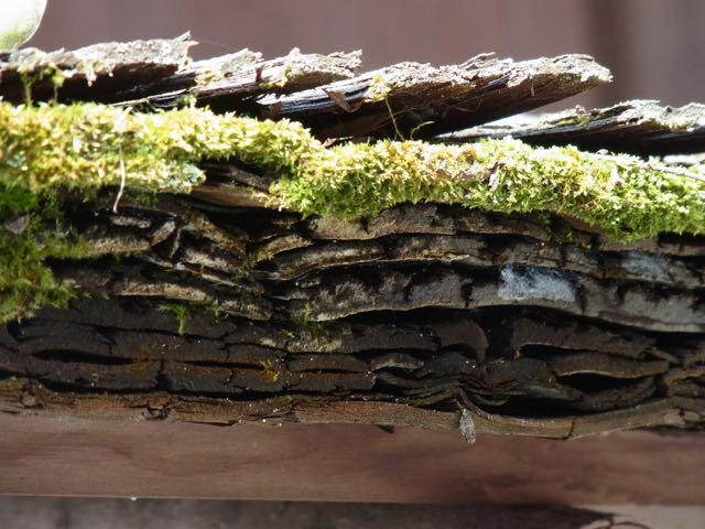 屋根の構造と、苔。.jpg