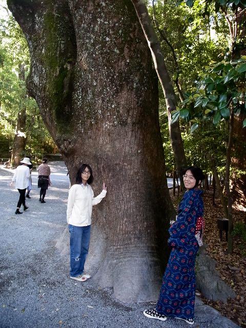 巨木がたくさんあります。.jpg