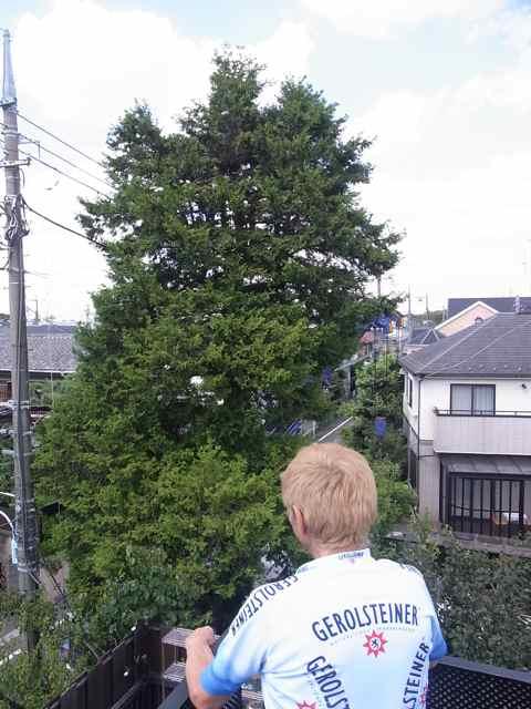 我が家のとなりの大樹が消えた.jpg