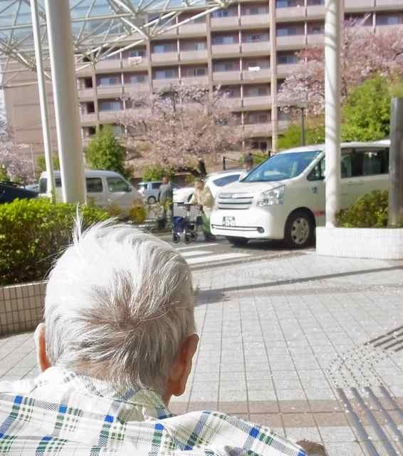 桜を!.jpg