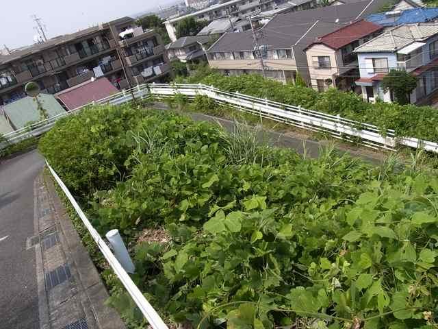 生田の坂1−2.jpg