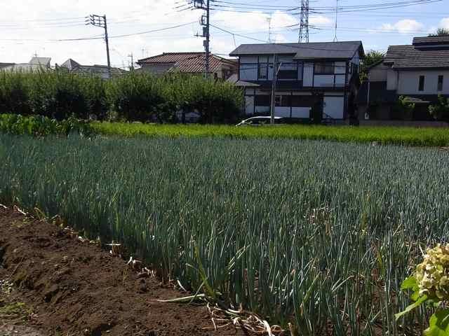 畑.jpg