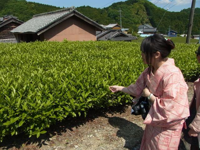 竹内邸の茶畑.jpg
