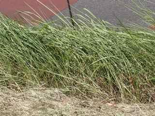 草倒れる.jpg