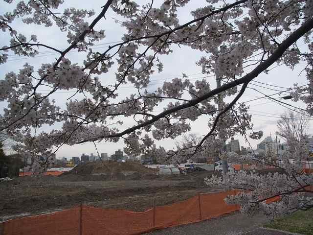阿佐ヶ谷住宅跡地と桜.jpg