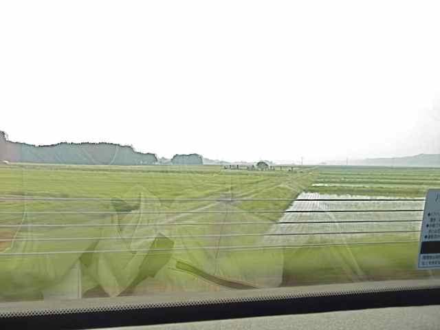 麦畑と、田植えの済んだ圃場.jpg