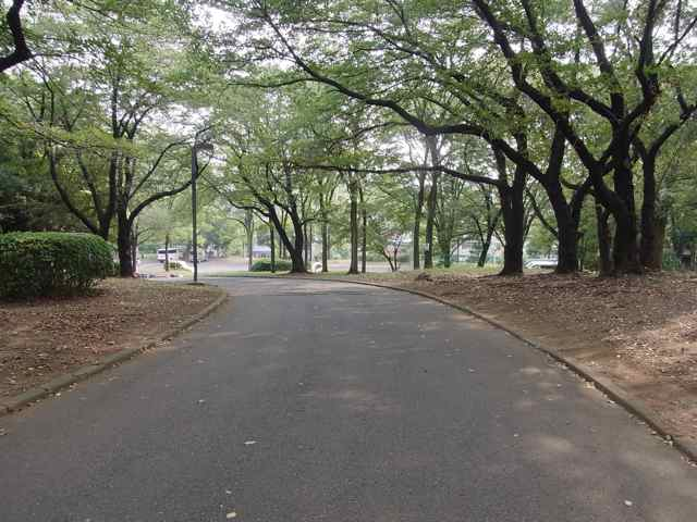 代々木公園内の坂.jpg