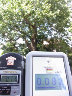 大樹0.082 0.11.jpg