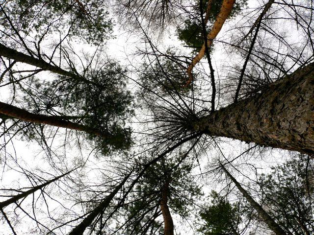 家の樹々.jpg