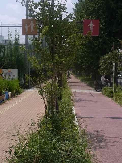 自転車道路.jpg