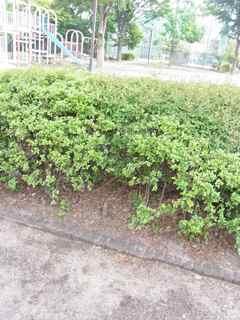 茂みの下.jpg