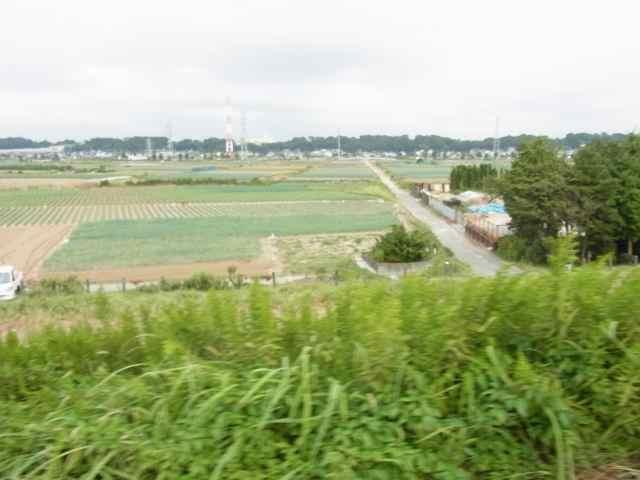 長ねぎ畑.jpg